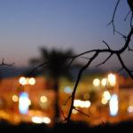 В пыли хамсина #2. Танец живота и артишоки