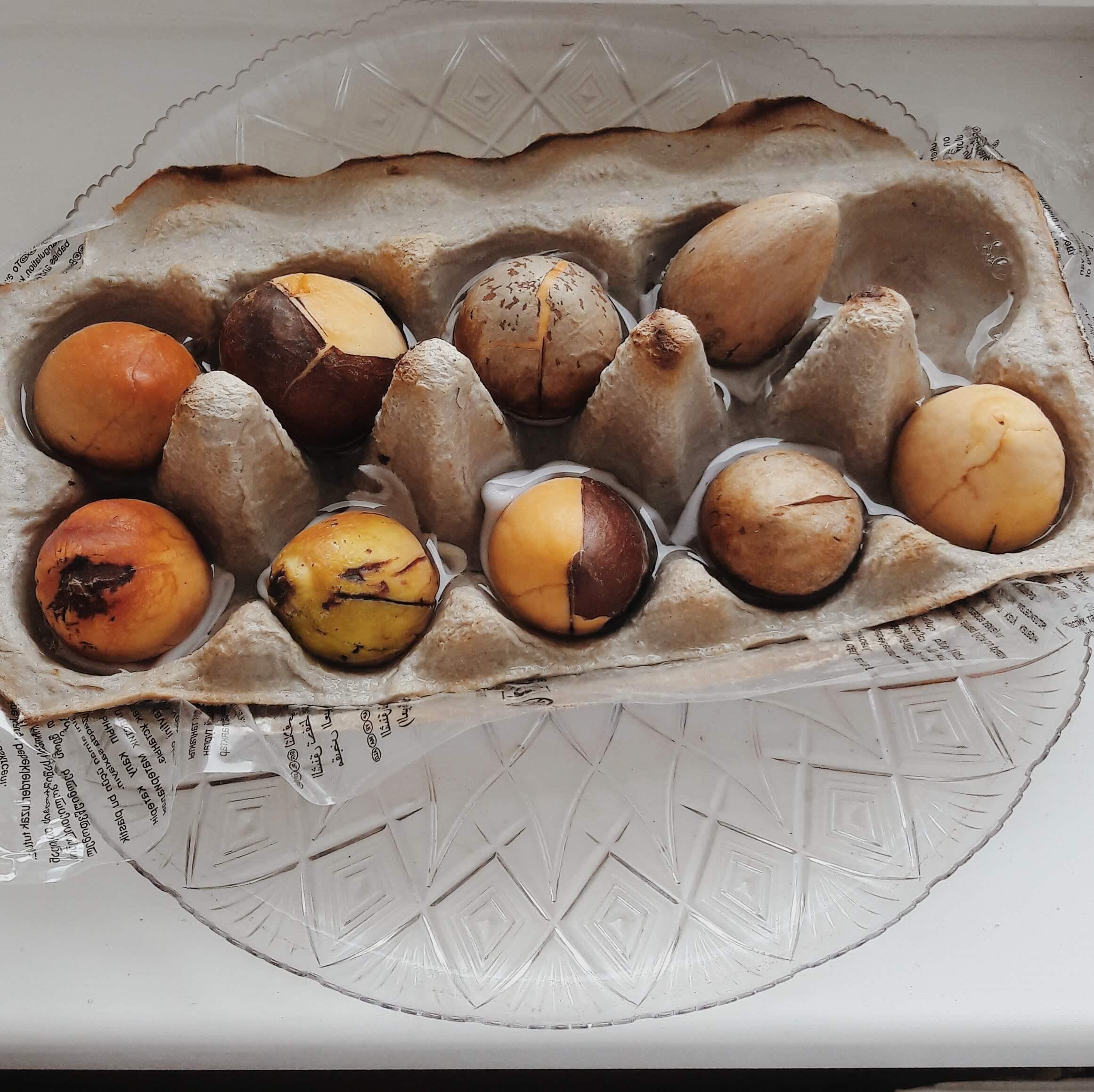 Как вырастить авокадо из косточки | karandasha.ru
