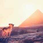 5: Собаки Оттоманского Египта