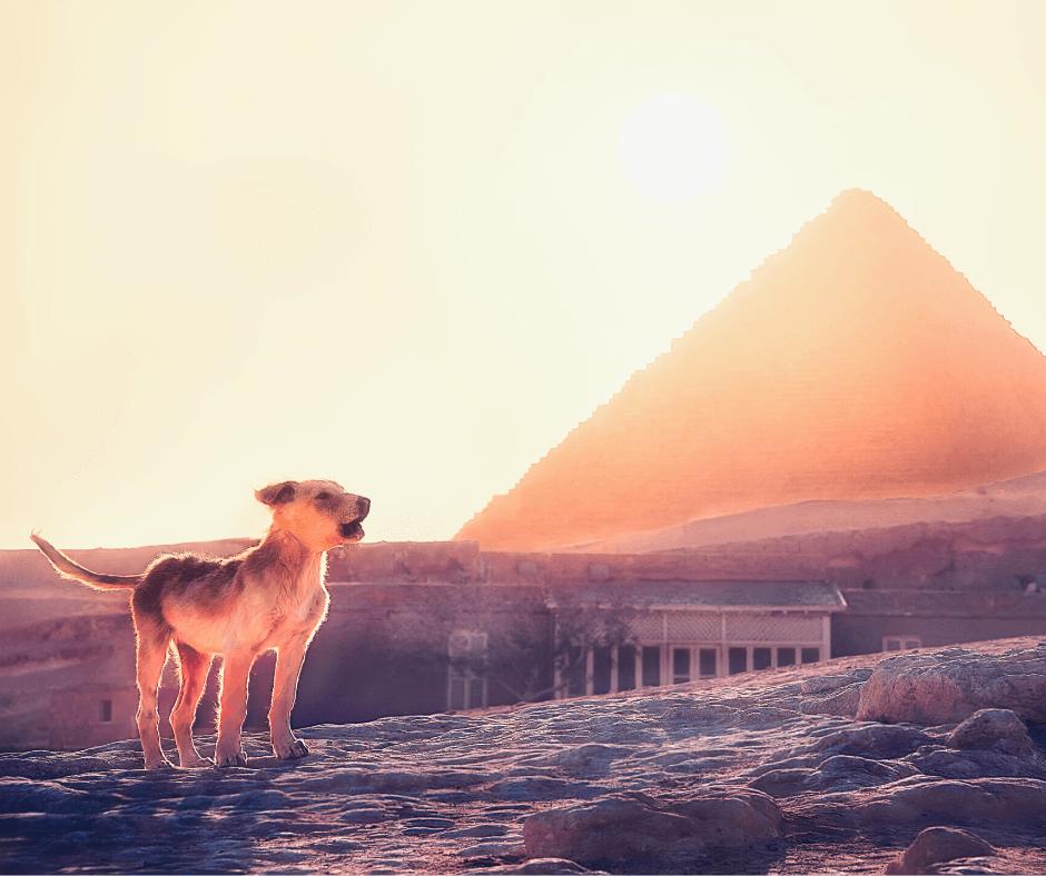 Собаки Египта | karandasha.ru